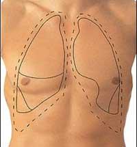 situacion de los pulmones