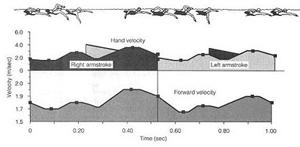 velocidad de nado duran un ciclo